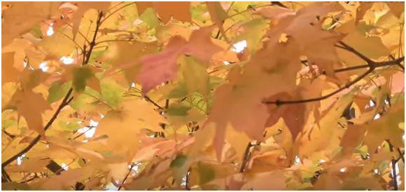Come realizzare decorazioni per la casa con le foglie autunnali