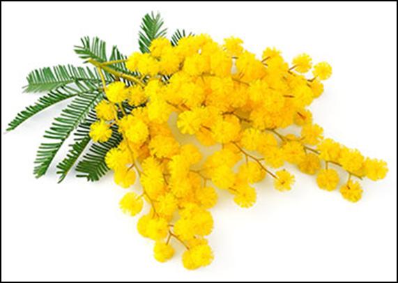 Come realizzare rami di mimosa con la carta per la festa della donna